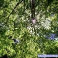 瑞鳳殿の緑