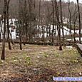 荒沢湿原の木道