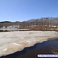 田谷地沼に浮かぶ氷