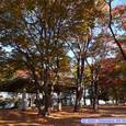 宮城野原公園の紅葉