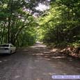 二口渓谷の林道