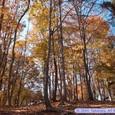 多賀城廃寺跡の紅葉
