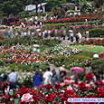 東沢バラ公園(バラまつり)