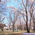春の加瀬沼公園
