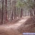 水芭蕉の森/どうだんの森