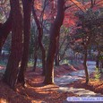 夕日に映える紅葉