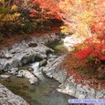 中津川渓谷の紅葉