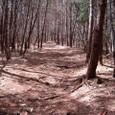 仁田沼(にだぬま)へ続く遊歩道