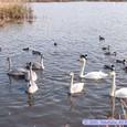 冬の阿川沼