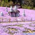 スパッシュランドパークのシバザクラ