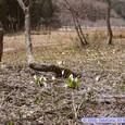 玉の木原湿原