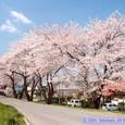 磐井川の風景