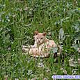 榴岡公園の猫ちゃん