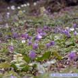 湯瀬渓谷の草花