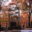滝見台の紅葉