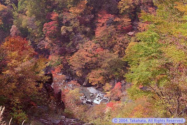 滝見台から谷底を眺める